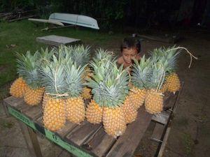 Ananas de Moorea, noix de coco du jardin des cousins, fruits indonésiens et fruits malgaches