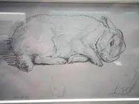1- Beatrix POTTER / Sa vie, son oeuvre, son amour des animaux et de la protection de la nature, ses  talents d'illustratrices et de conteuse
