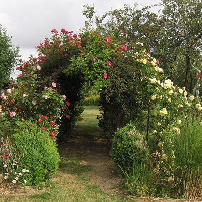 f1rcx-jardin