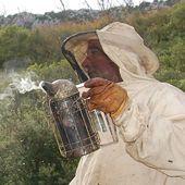 immersion dans le monde des abeilles 1/2 au milieu des ruches - Autour de