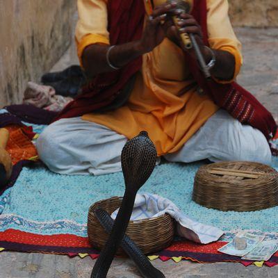 Inde éternelle / Jaïpur / 2014 / Il est 08h18, nous sommes le 30 Mars 2021