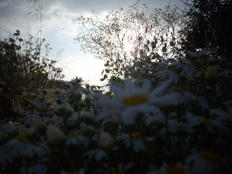 Photos prises par jg56 le 04 / 05 / 2011 à 7h12, 17h13 et 17h18 à Pruno et à 18h29, 18h31 et 19h04 à Talasani (Haute-Corse).