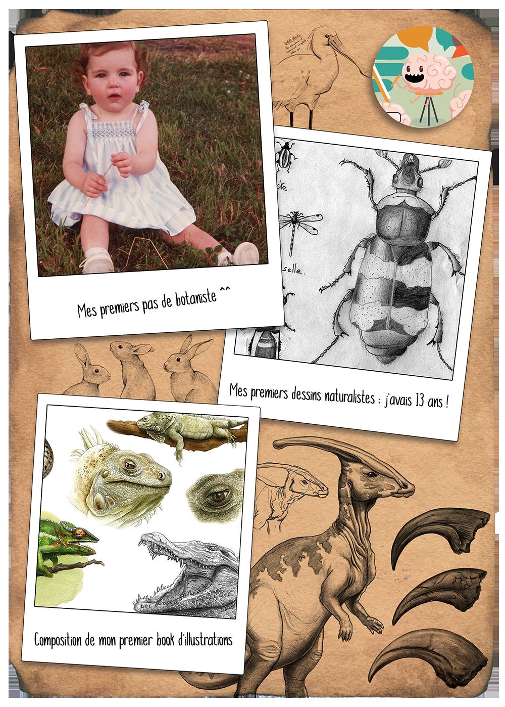 Ma vie d'illustratrice scientifique naturaliste sur ComSciComCa
