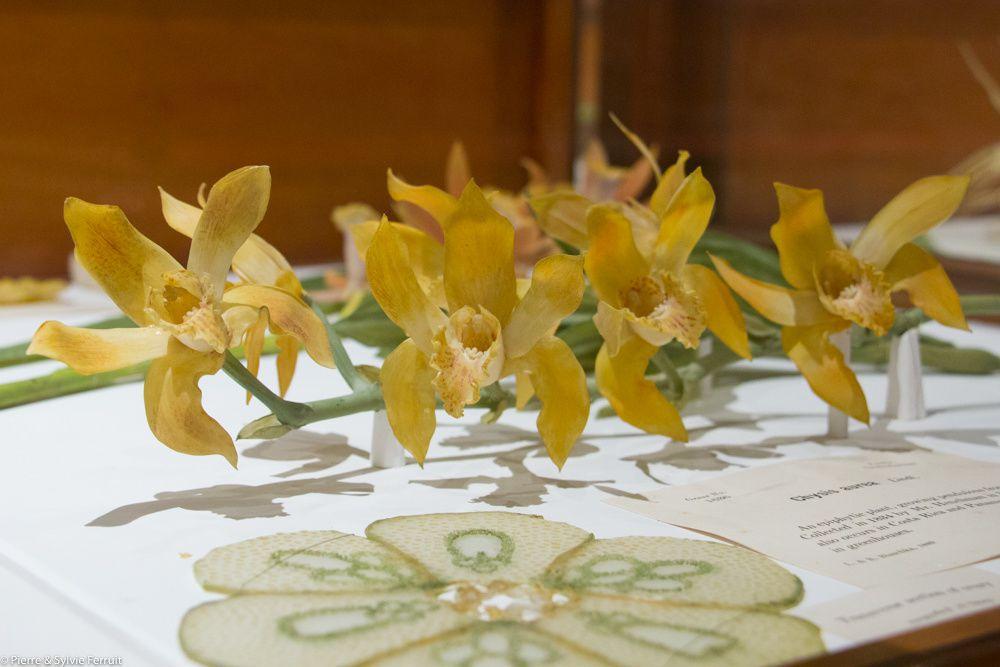Détails de modèles de plantes en verre.