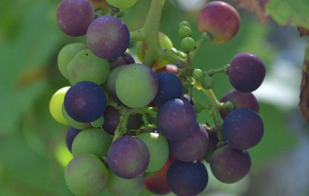 Retrouvez-moi, ce samedi, pour l'Atelier - Formation « Planter des arbres fruitiers et les entretenir pour récolter beaucoup de fruits » chez Un Potager à la Maison, à Ottembourg (Wavre nord)