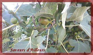 Mon Figuier, Mon olivier et Moi ... Une grande Histoire d'Amour ^^