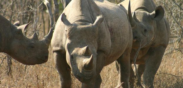 Reserva animalista Mkhaya - Rinocerontes
