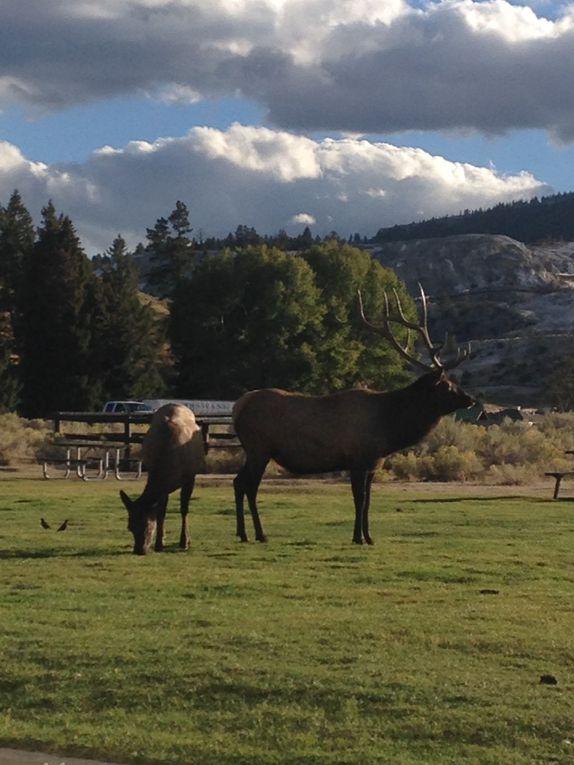 USA : de la frontière canadienne au parc Yellowstone - du 1 au 12 septembre 2016