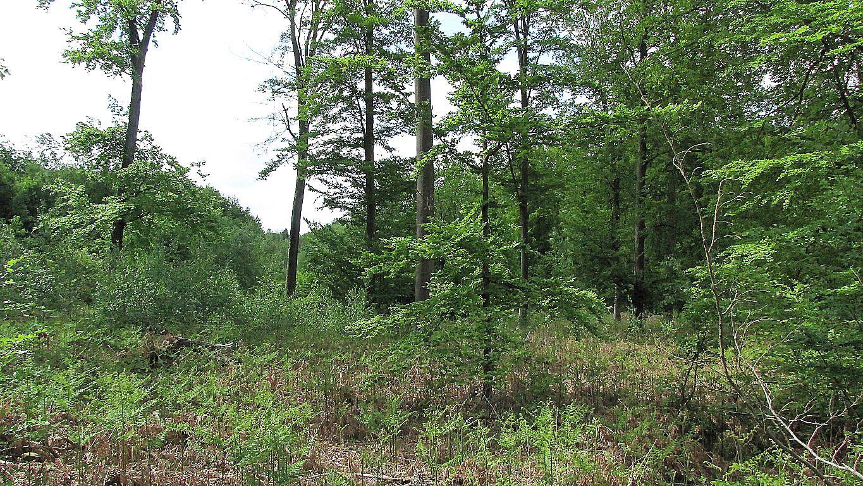 Randonnée en Forêt de Laigue_les Chemins du Plessis-Brion et de la Voie de l'Eau