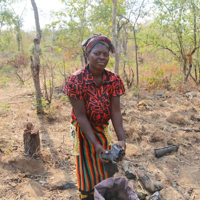 Is Charcoal production still a male dominated industry? Unveiling the fast growing number of Zambian women involved in the charcoal value chain