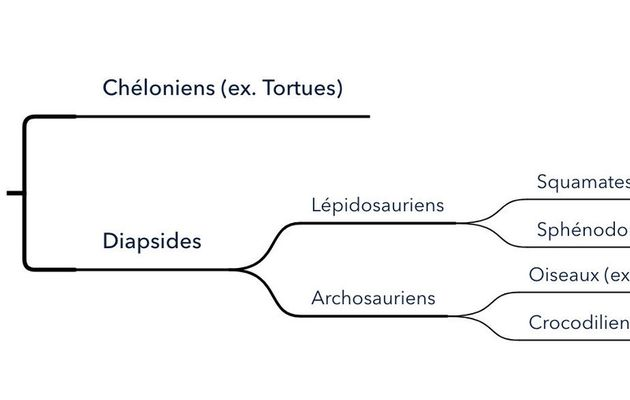 La classification des Sauropsides