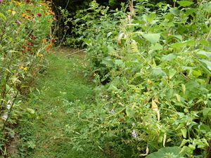 Il y en a partout : dans les cyclanthères, dans les poires de terre et jusque dans le passage !