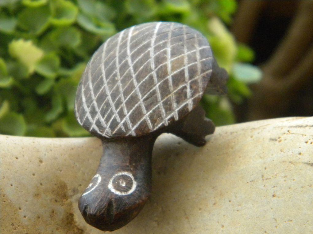Waħed est la première tortue de ma ptite collec'