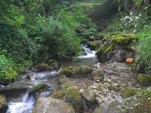 Le ruisseau cascadeur