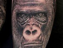 tatouage gorille