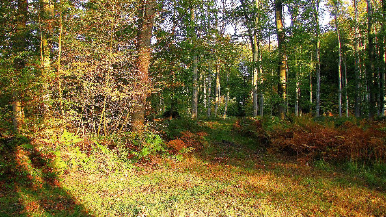 Le GR12A dans les Forêts de Laigue et de Compiègne