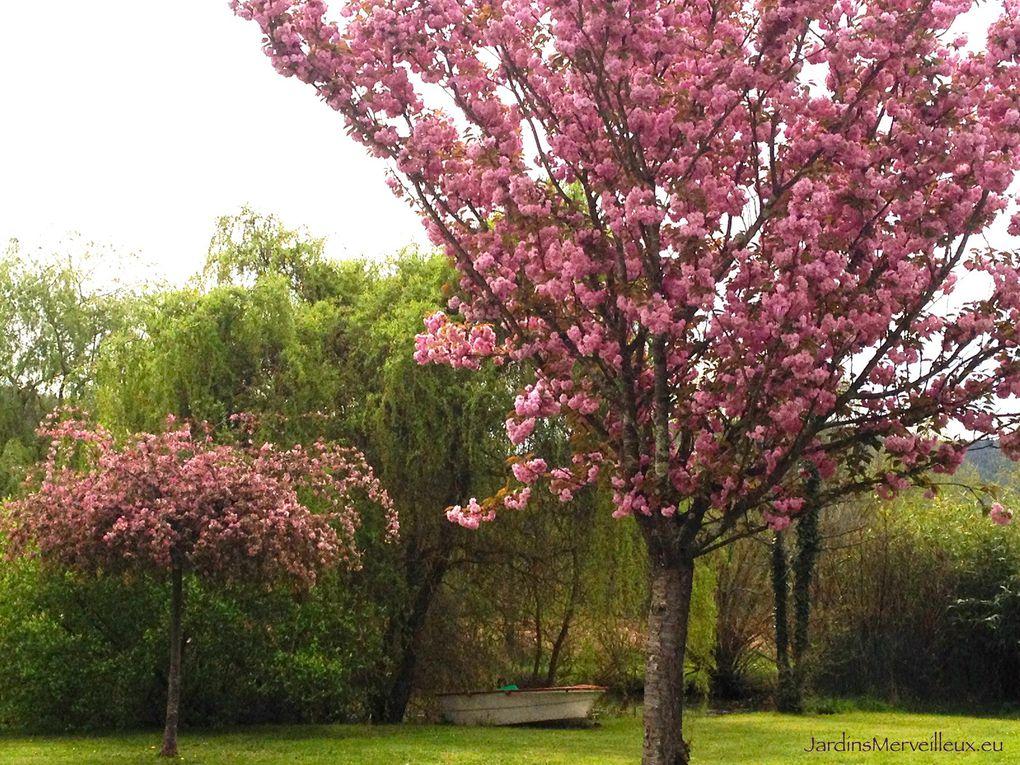 Secteur sud-ouest du Jardin de Frescati : cerisiers et pommiers à fleur
