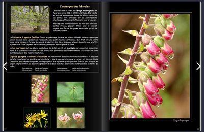"""L'expo """"AuvergneS en fleur"""" en virtuel..."""