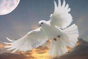 Bonne Fête de Pentecôte : Que le Feu de l'Esprit Saint 2012 Soit en chacun de nous...