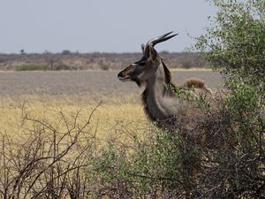 ACTE 7.1 / Across Africa 2015 / Namibie-Botswana