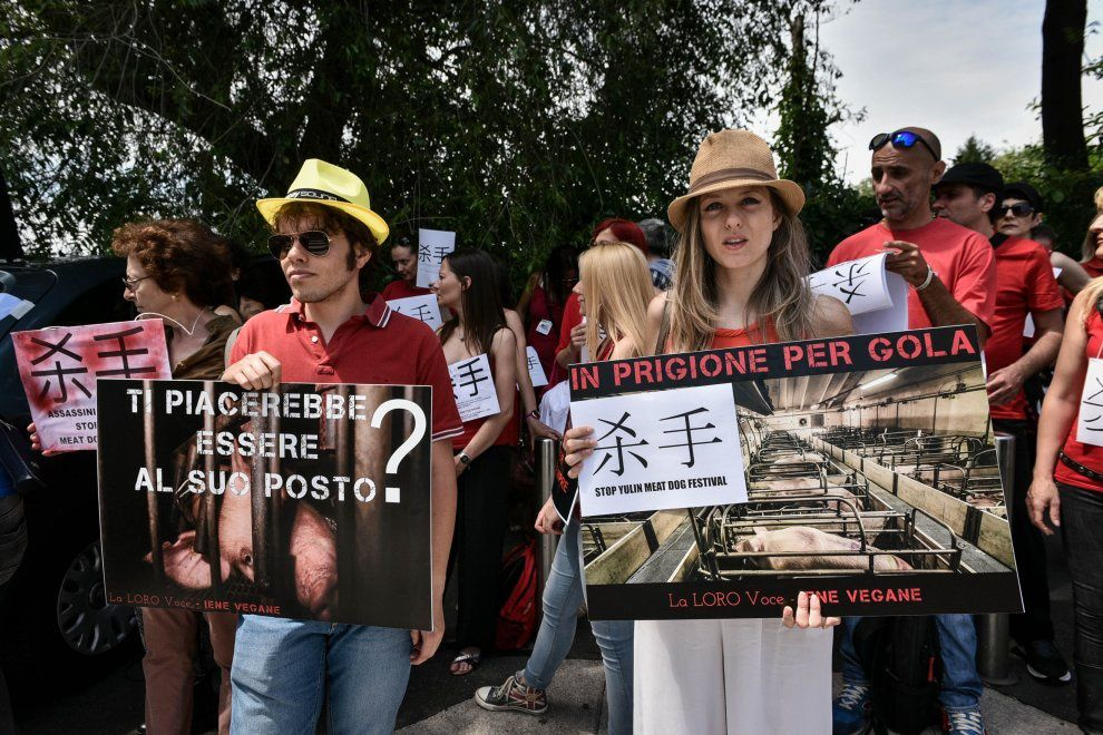 """Festival carne di cane in Cina, proteste a Roma e Milano: """"Stop alla strage"""" [ photo gallery ]"""