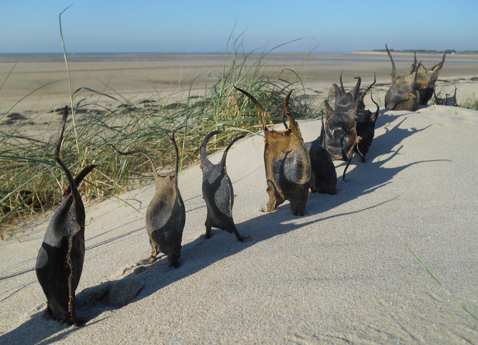 Capsules de raie - la grande traversée - Land art Levaillant 2014