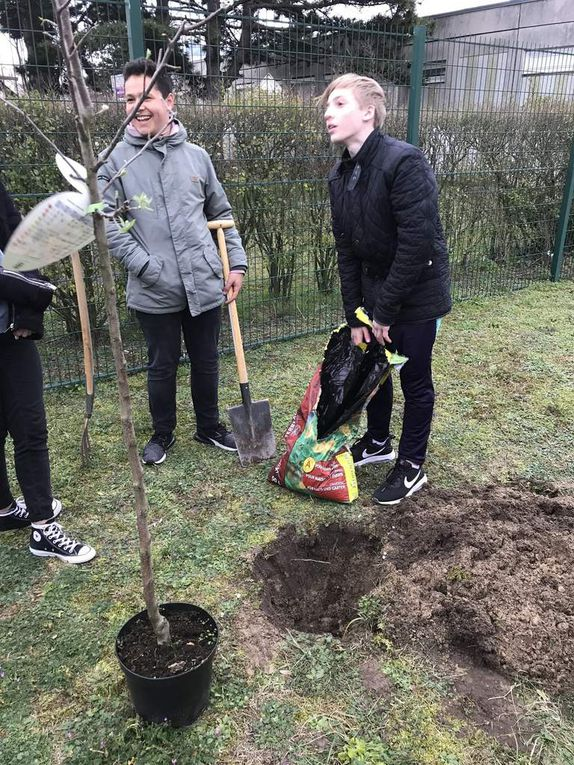 CIEE Trees for Europe
