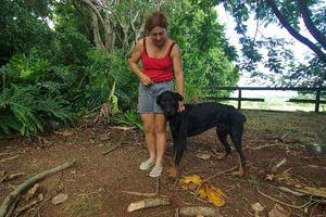 DOUGLAS - 10 mois - mâle croisé beauceron - adopté