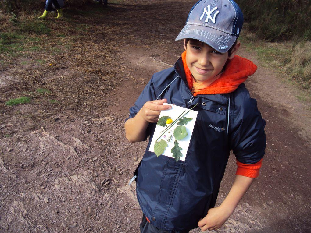 Voyage en forêt de Brocéliande en octobre 2010.
