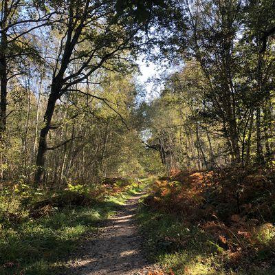 Randonnée en boucle de Boissy-Saint-Léger - 26,3 km.
