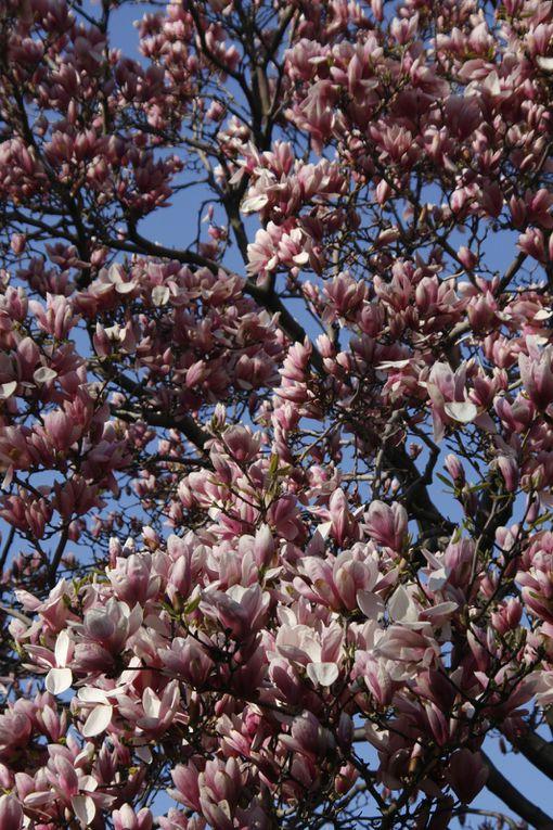 Album - Spring-Time
