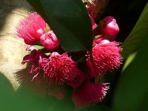 Fleurs du jour (21-09)