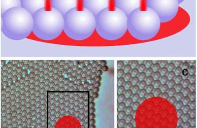 Multi-focus FCS with photonic nanojets arrays