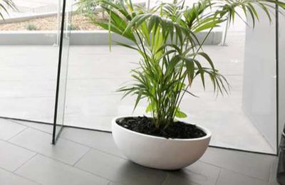 Improve Overall Plant Wellness With These Tips Of Indoor Plant Hire Experts