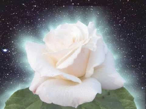 Rose's birth (naissance d'une rose)