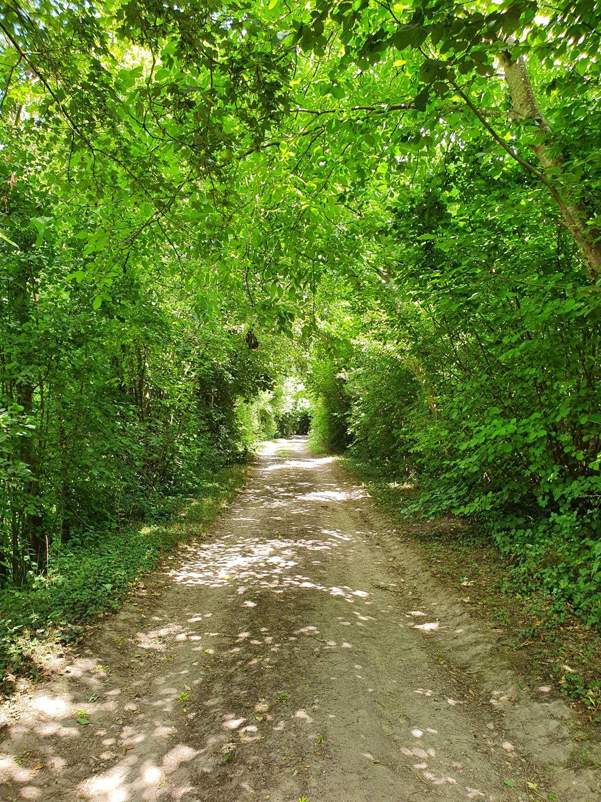 07 juillet 2020 - La Via Francigena de Péronne à Trefcon