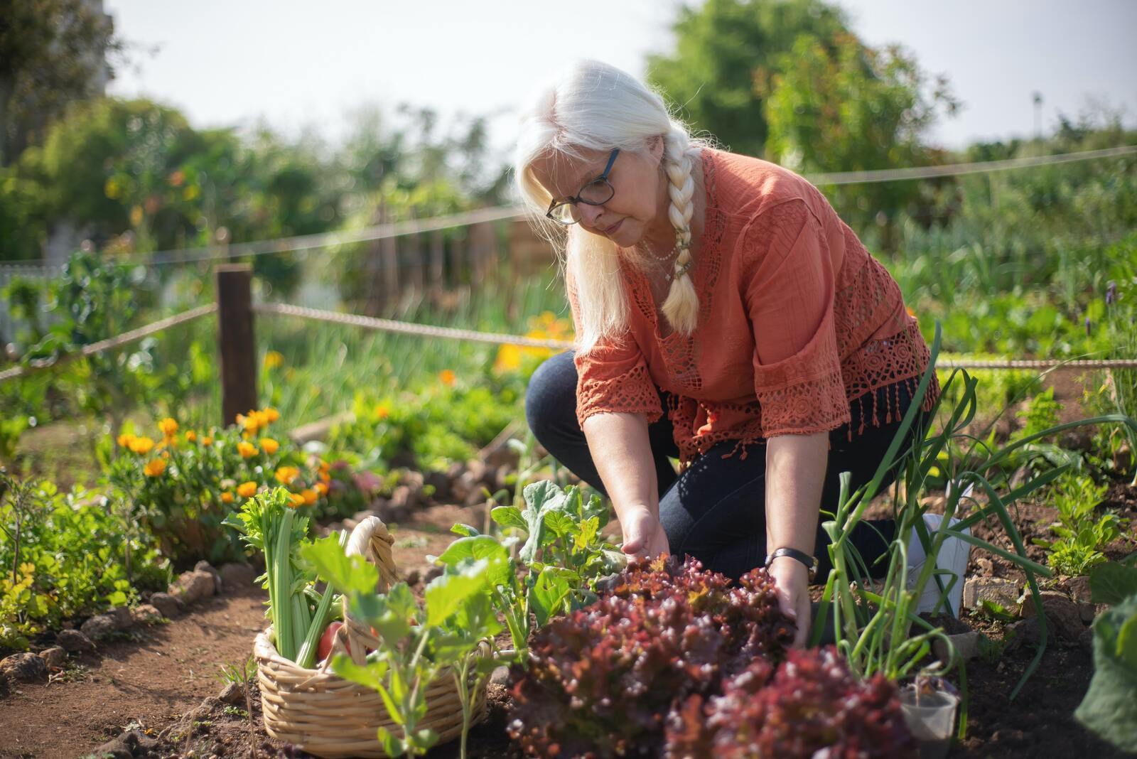 Que faire dans le jardin en ce mois de septembre ?