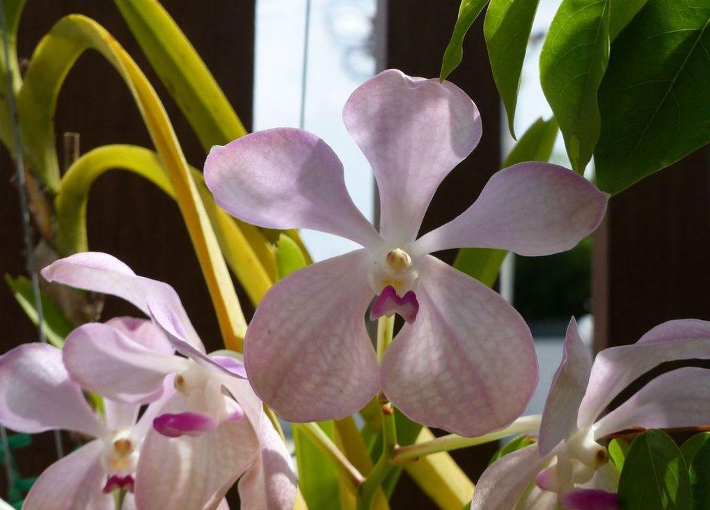 Fleur du jour (9)... et du jardin ! (encore)