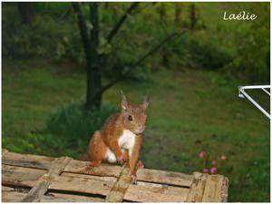Un écureuil téméraire...