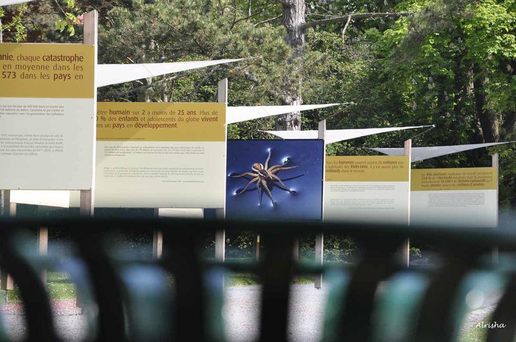 Au Parc de champagne, une très belle expo dans le cadre de l'année internationale de la biodiversité !