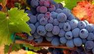 #Red Rioja Producers Wisconsin Vineyards