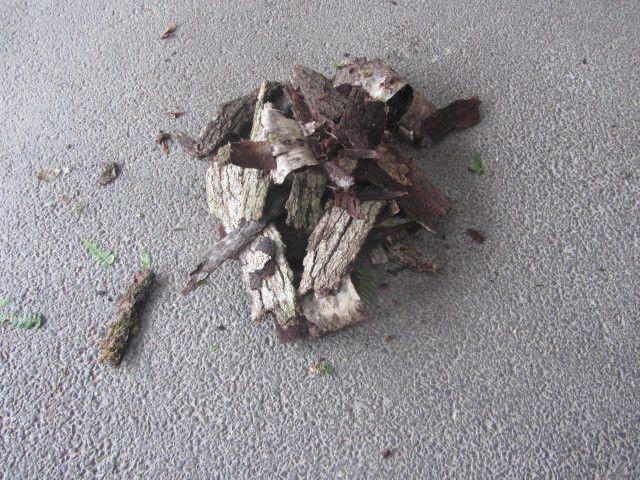 On a rassemblé des tas de bois et des écorces.