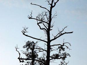 Structure des arbres