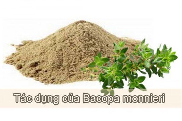 7 tác dụng của Bacopa Monnieri được ứng dụng rộng rãi