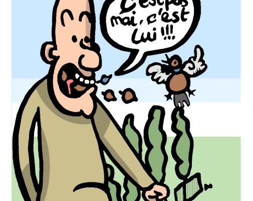 Ecologie:Dérogation refusée pour la chasse aux pinsons: