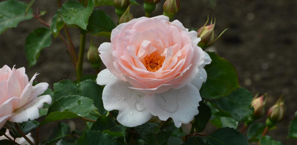 Un Jour une Nuit en Jardin Rose