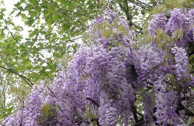 [cuisine] mangez des fleurs et plantes de votre jardin !