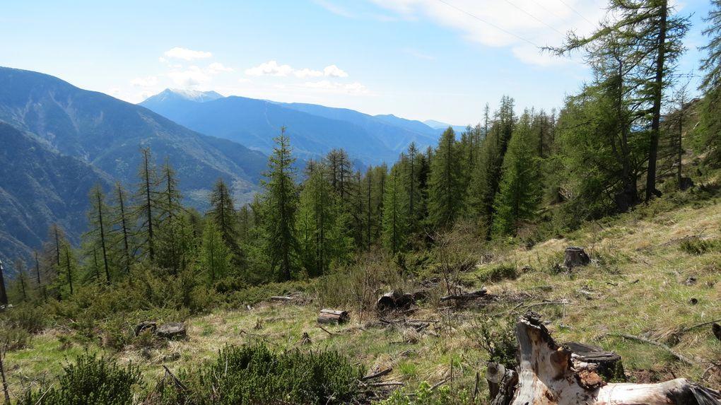 Forêt de la Fracha