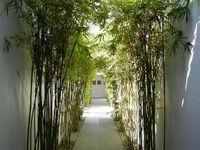 """"""" Le jeune bambou remplace le vieux bambou"""" proverbe vietnamien"""