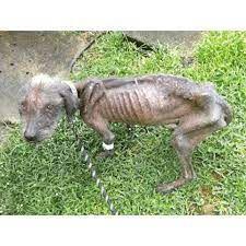 Trois chiens sauvés de la maltraitance de leur propriétaire à Villepinte